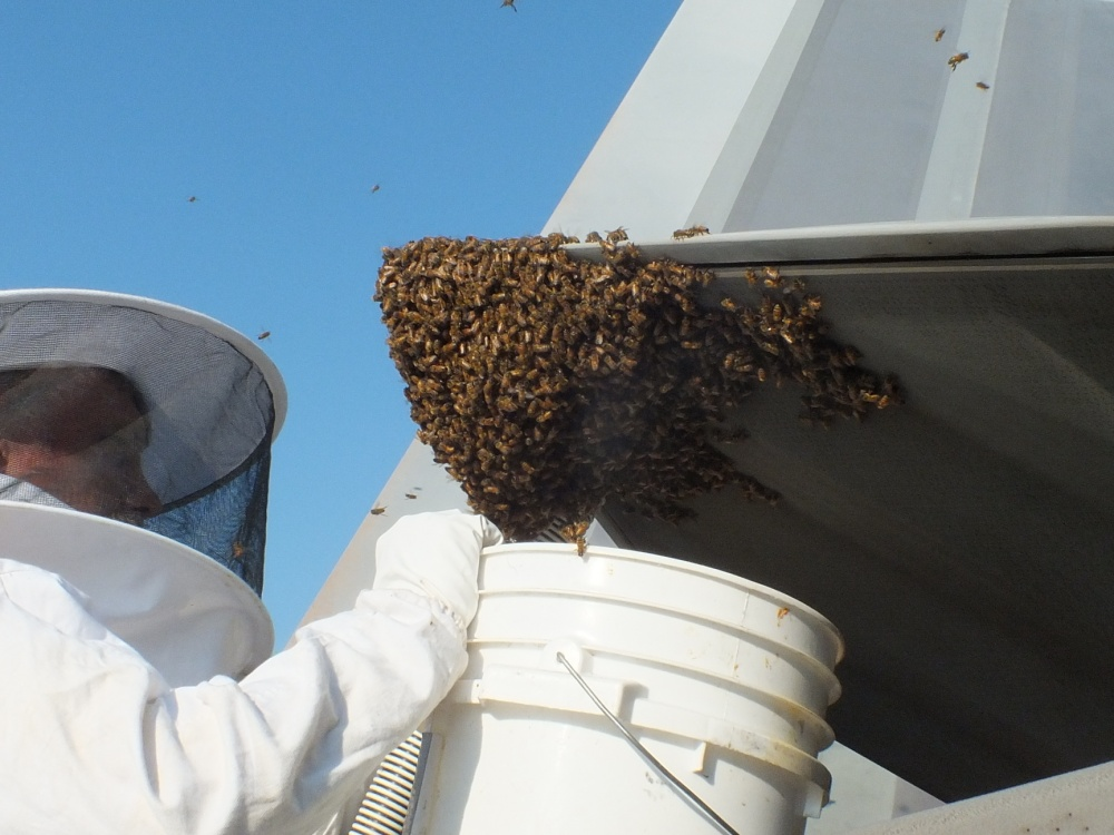 That time an F-22 Raptor Provided Refuge for 20,000 Honey Bees